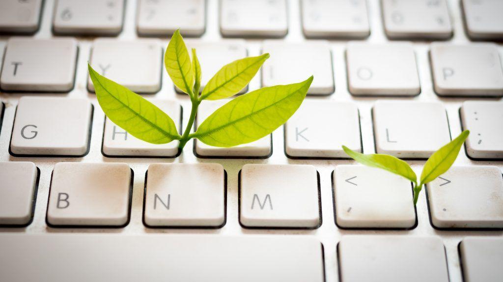Clavier avec des feuilles pour symboliser le numérique responsable