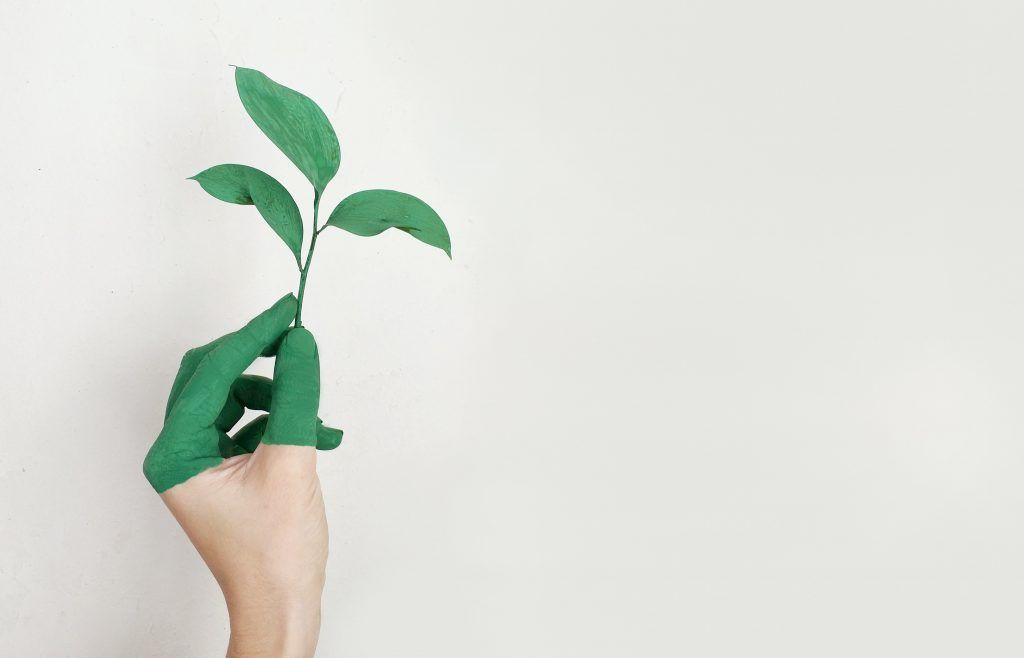 Image d'une plante pour représenter l'écologie