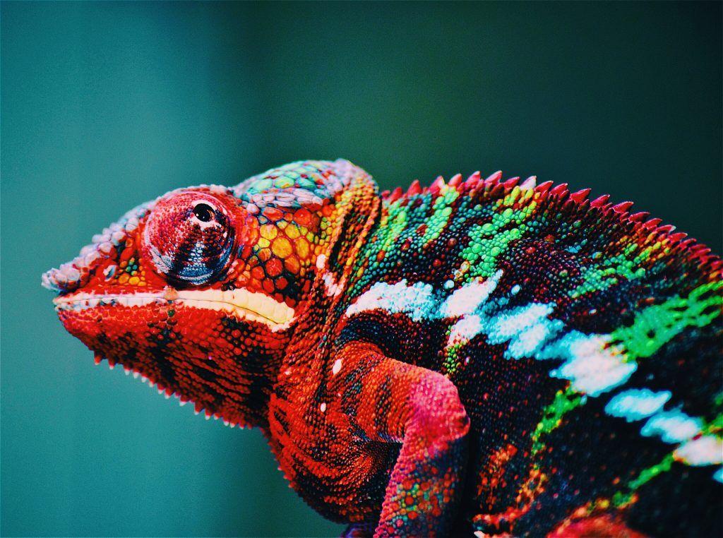 Photo illustrant des couleurs vives pour un visuel percutant