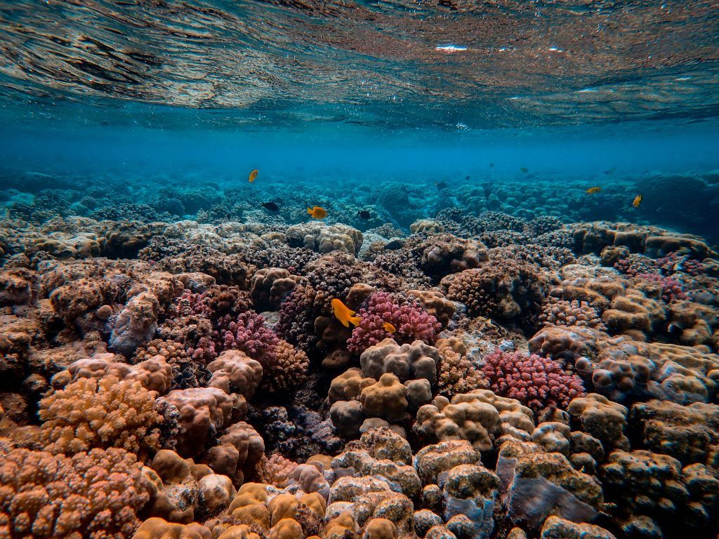 coraux et poissons qui montrent la biodiversité des océans qu'il faut préserver grâce à des astuces durables